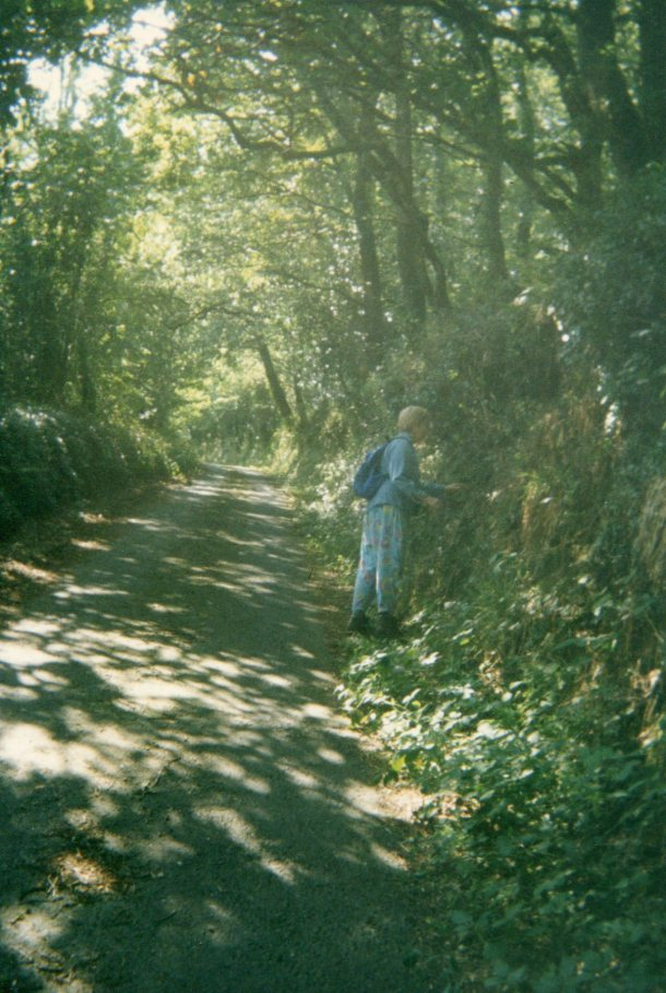 Walking in the woods on the road to Crackington Haven