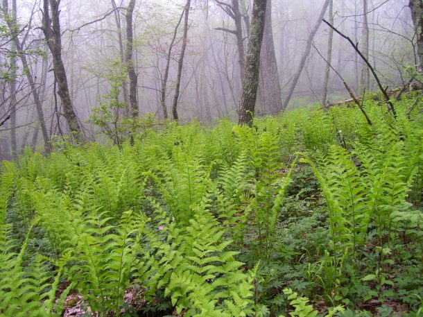 A fern forest