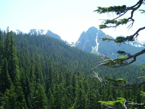 Glorious forests of fir everywhere