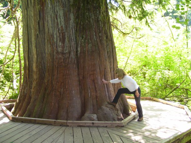 Can you believe the girth of these wonderful trees