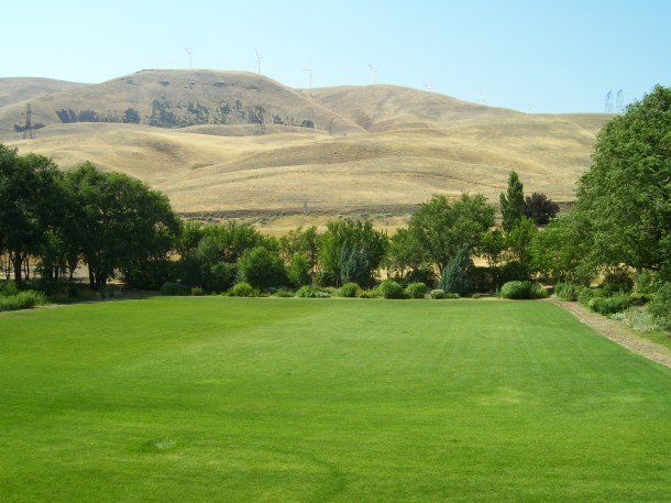 Green green grass at the Maryhill Museum in the middle of desert