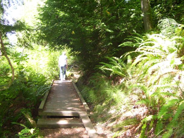 A trail up the mountain in Mukilteo