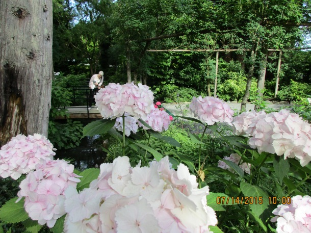 Incredible flowers - but the hydrangeas were awesome